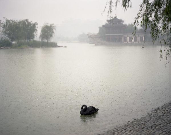 Black Swan, Xi'an, Shanxi Province.