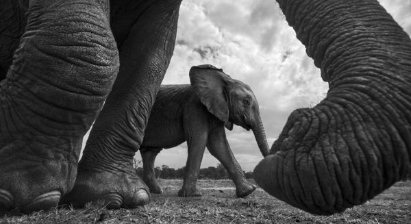 006_nature_and_wildlife_series
