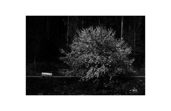 "Serie ""Nocturnal Landscape"""