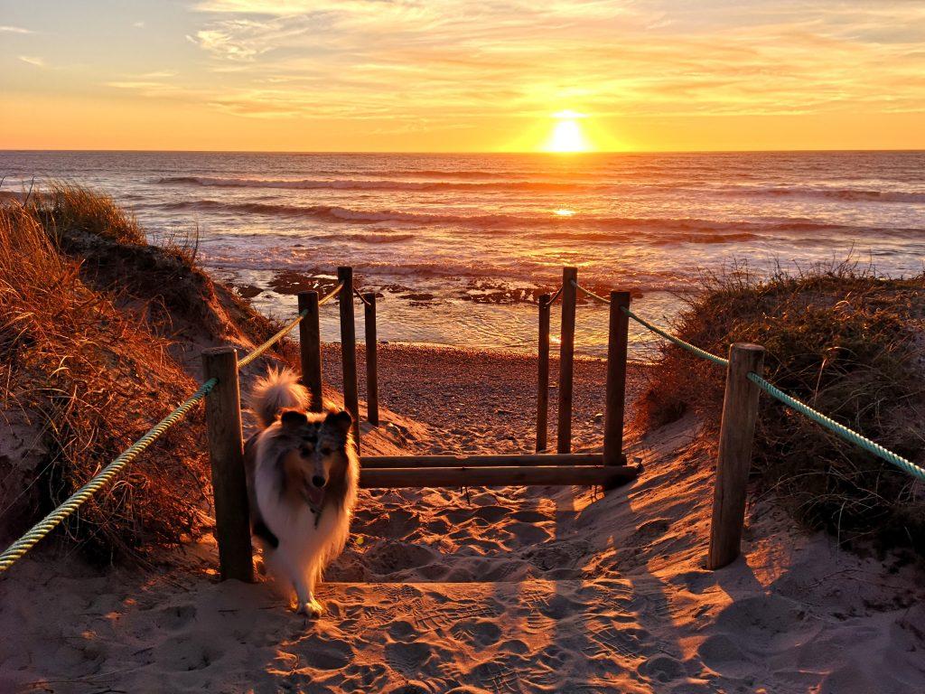 Xavi on the beach